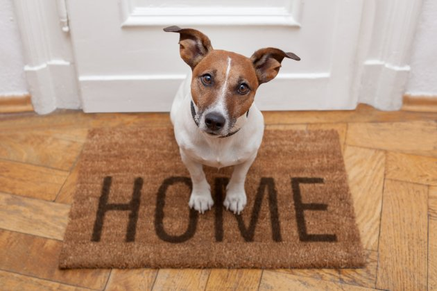 creating-a-fabulously-pet-friendly-home